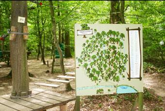 parcours trail parc davy crockett